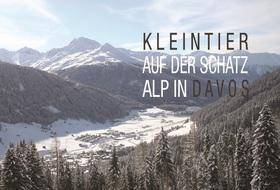 KLEINTIER Davos 2020: KLEITNIER Darm, Leber, Pankreas - internistisch, onkologisch oder chirurgisch?