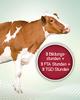 Richter Pharma Rindertage – Seminar für Tierärzte