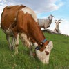 Grünland- und Viehwirtschaftstag 2021
