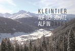 KLEINTIER Davos: Reisekrankheiten oder nicht – Parasiten, Infektionen und andere Souvenirs
